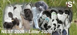 BANNER nest 2008kopie