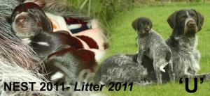 BANNER nest 2011 copy